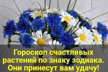 Гороскоп счастливых растений