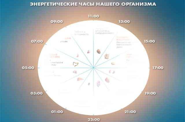 Энергетические часы нашего организма