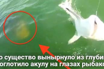 Это существо вынырнуло из глубин и проглотило акулу на глазах рыбаков!