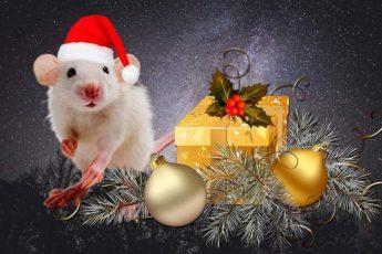 Белая Крыса открывает новую сансару