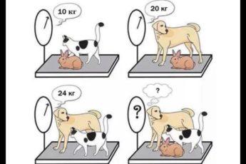 Арифметическая загадка для находчивых