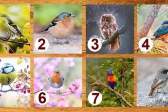 Выберите птичку, она нащебечет послание, нужное на данный момент