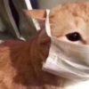 Болеют ли COVID-19 кошки, собаки и другие домашние животные