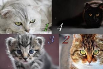 Гадание на Кошку. Выберите изображение Кошки и прочитайте, чего ждать от следующей недели