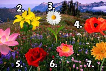 Сорви цветок и узнай сбудется ли твоё желание