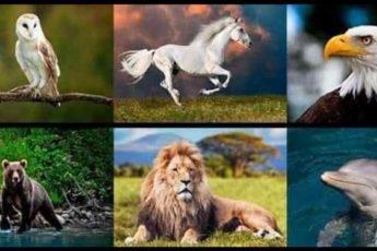 Задайте себе вопрос и выберите животное — оно даст вам ответ, который вы ищете