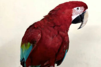 Мама купила попугая подозрительно дёшево. А теперь дёшево продаем его мы