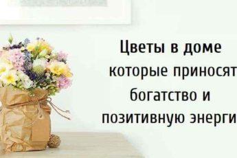 Цветы в доме которые приносят богатство и позитивную энергию