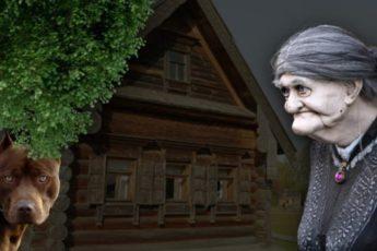 Добрейшей души бабуля подобрала в дом питбуля – спустя год раздался неистовый крик