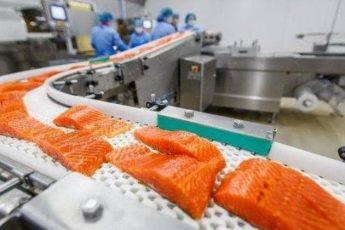 Вы знали про эти ужасные факты о норвежском лососе? Тогда посмотрите видео