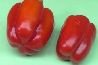 Жена послала в магазин за перцем: «купи перец-мальчика и не перепутай». А какая разница?